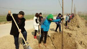 马楼镇积极开展义务植树活动
